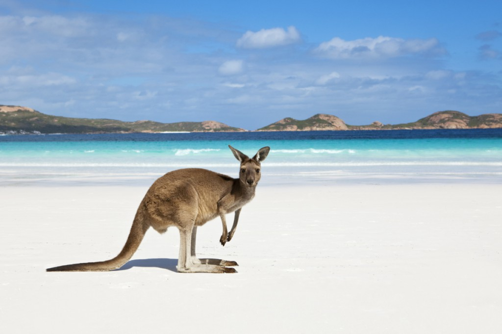 kangaroo-on-beach-1